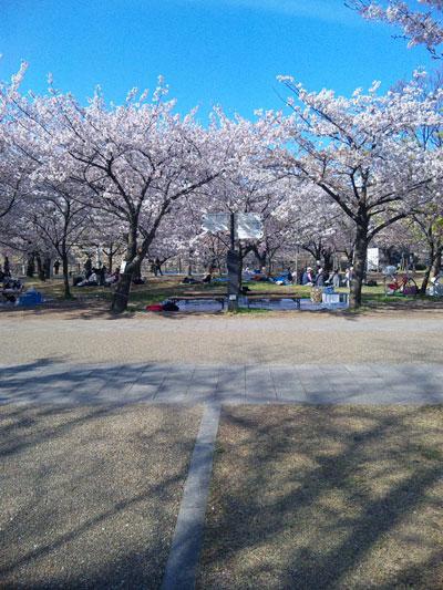 お花見会場大阪城公園